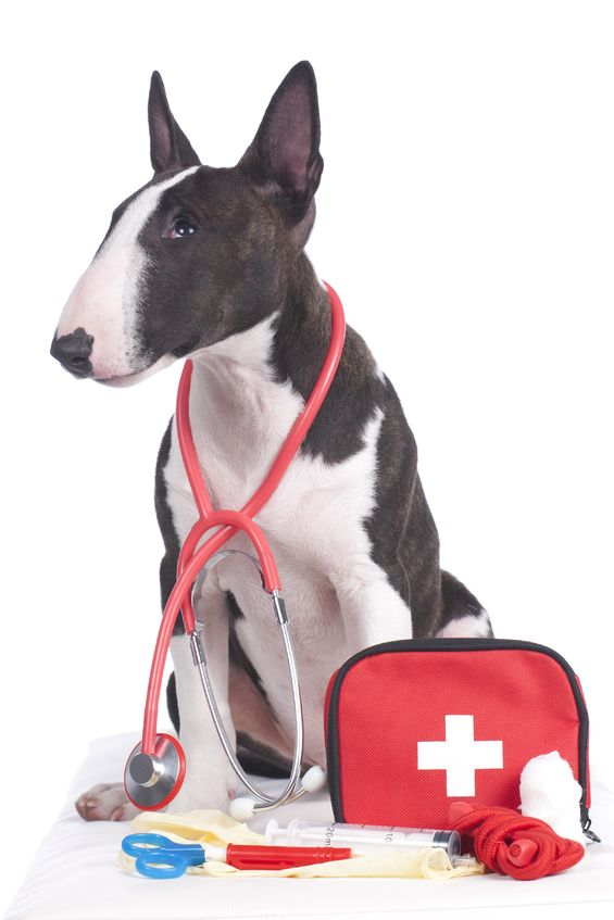 Pet Cpr Classes Paw Hills Luxury Pet Hotel Spa