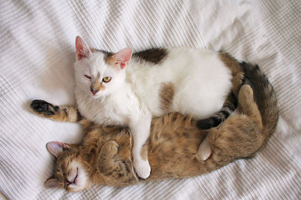 dog cat services paw hills luxury pet hotel spa. Black Bedroom Furniture Sets. Home Design Ideas