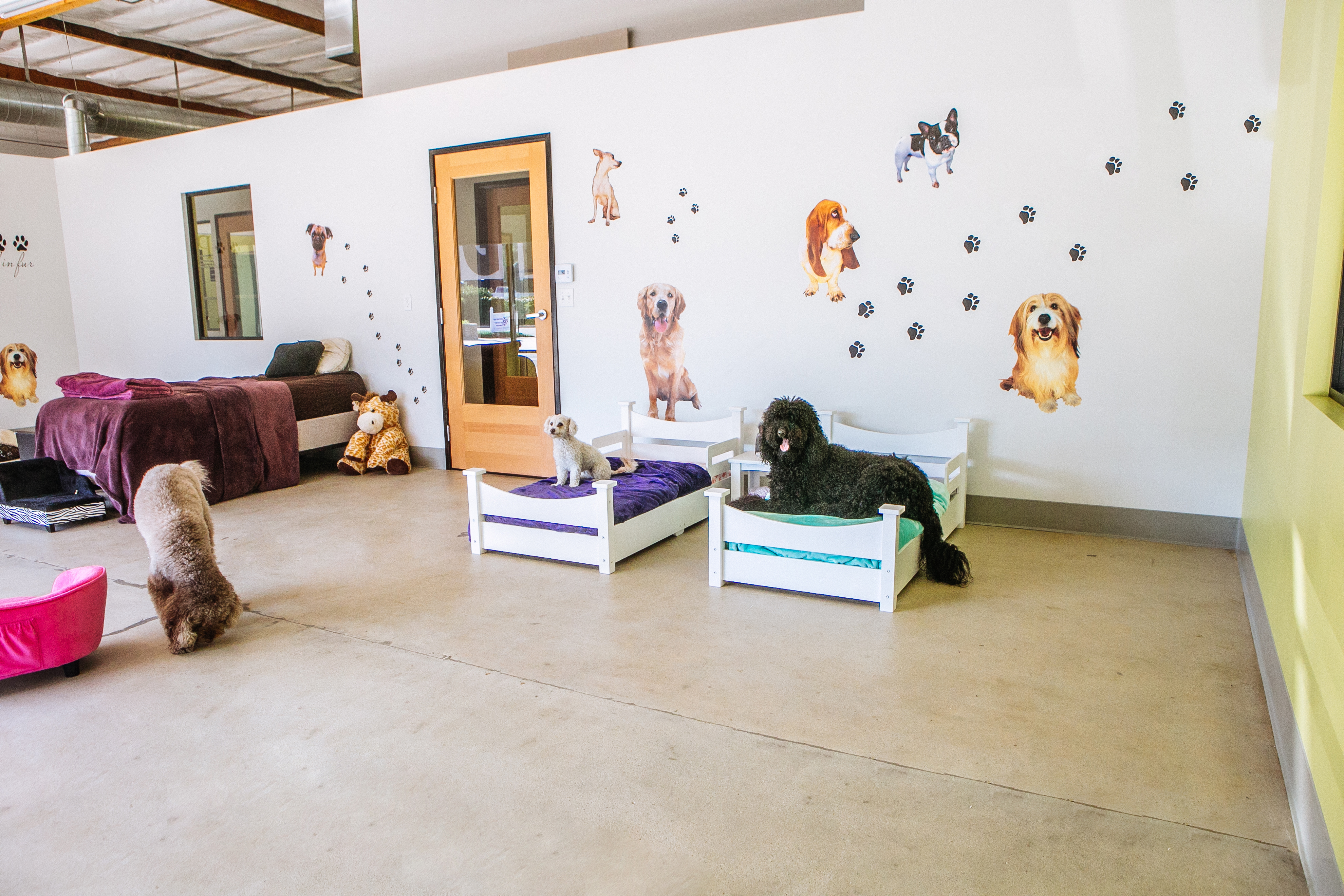 Rooms for dogs magnificent best 25 dog rooms ideas on for Pet bedroom ideas