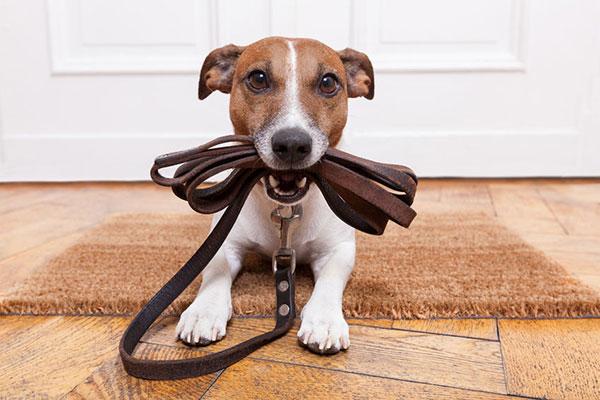 paw hills hotel dog training agoura hills